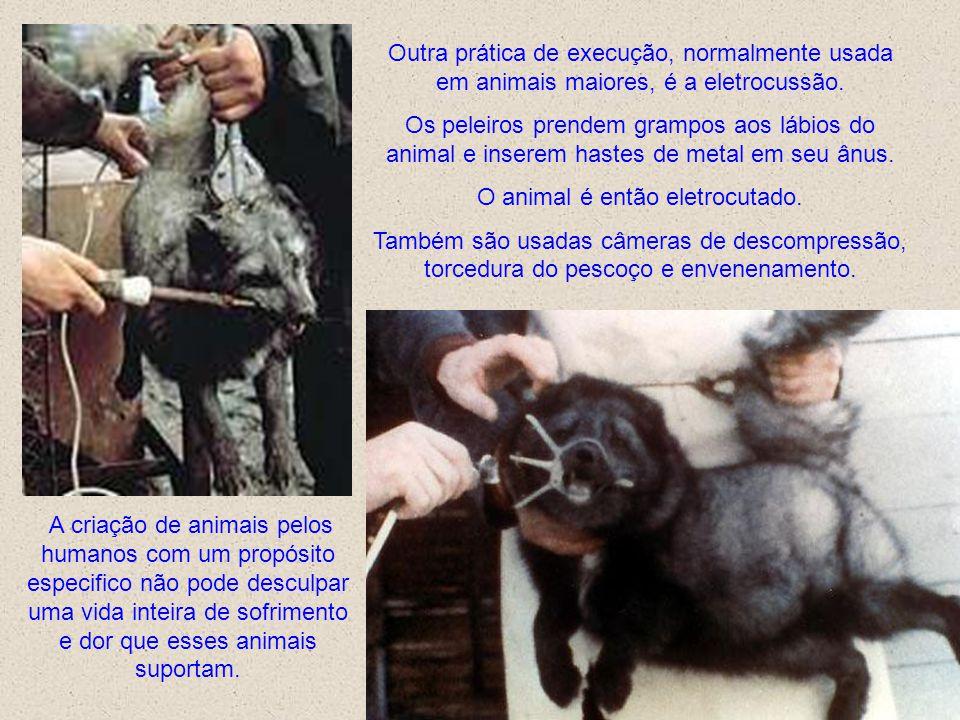 Os métodos usados nestas fazendas não refletem os interesses e bem-estar dos animais, mas sim o interesse primário do peleiro: o lucro. O fim do sofri