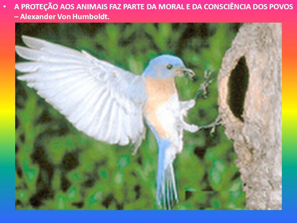 •A•A CAÇA É A MAIS VIL, BAIXA E ABJETA CARNIFICINA – Thomas More.