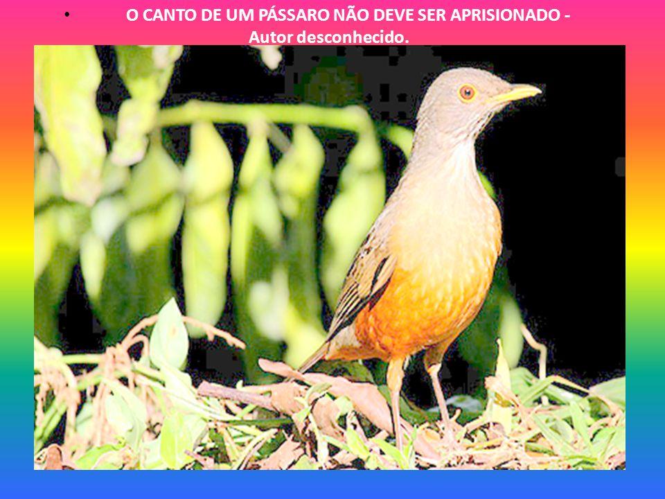 A NATUREZA FALA, MAS COMO UMA ALMA DEVE FALAR A OUTRA, SEM INTERMÉDIO DOS LÁBIOS – Machado de Assis.