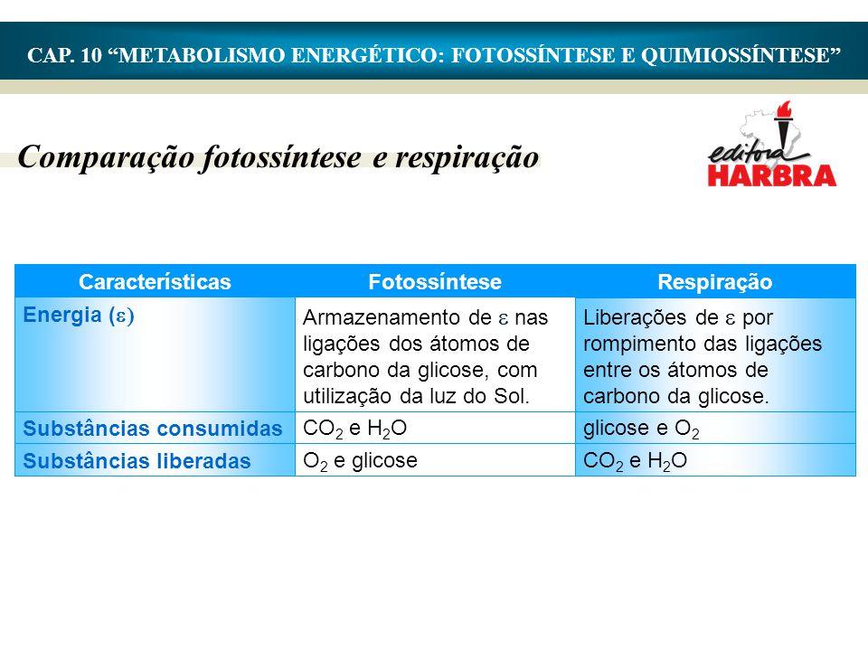 """CAP. 10 """"METABOLISMO ENERGÉTICO: FOTOSSÍNTESE E QUIMIOSSÍNTESE"""" Comparação fotossíntese e respiração O 2 e glicose Substâncias liberadas CO 2 e H 2 O"""