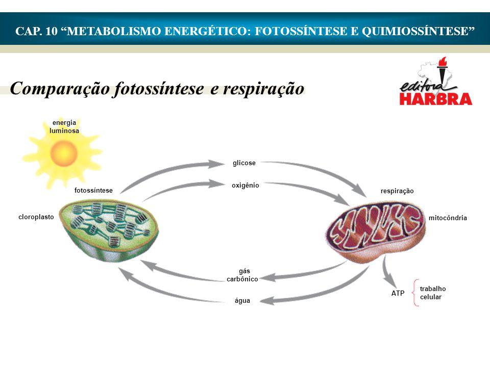 """CAP. 10 """"METABOLISMO ENERGÉTICO: FOTOSSÍNTESE E QUIMIOSSÍNTESE"""" Comparação fotossíntese e respiração energia luminosa fotossíntese cloroplasto glicose"""