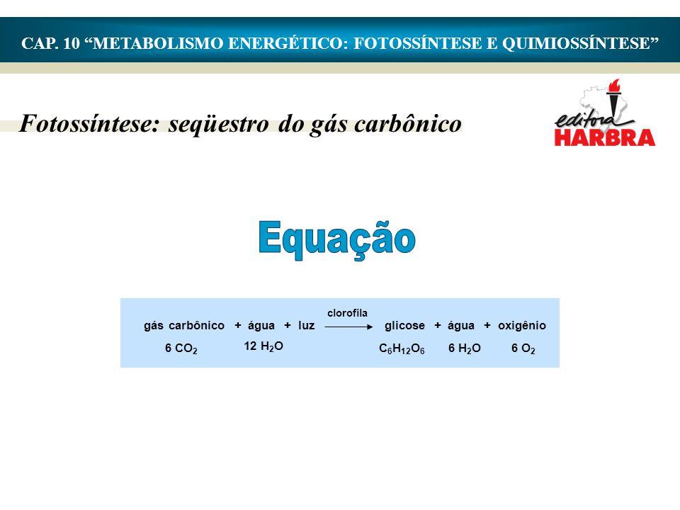 """CAP. 10 """"METABOLISMO ENERGÉTICO: FOTOSSÍNTESE E QUIMIOSSÍNTESE"""" Fotossíntese: seqüestro do gás carbônico gás carbônico + água + luzglicose + água + ox"""