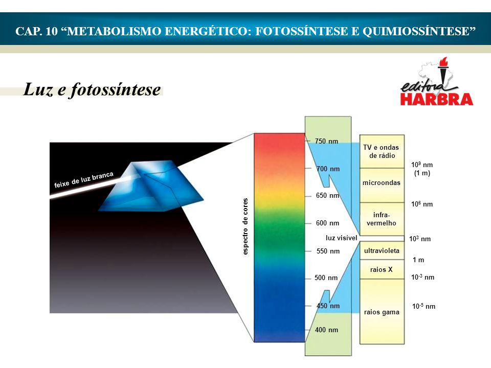 "Luz e fotossíntese CAP. 10 ""METABOLISMO ENERGÉTICO: FOTOSSÍNTESE E QUIMIOSSÍNTESE"" feixe de luz branca espectro de cores 750 nm 700 nm 650 nm 600 nm l"
