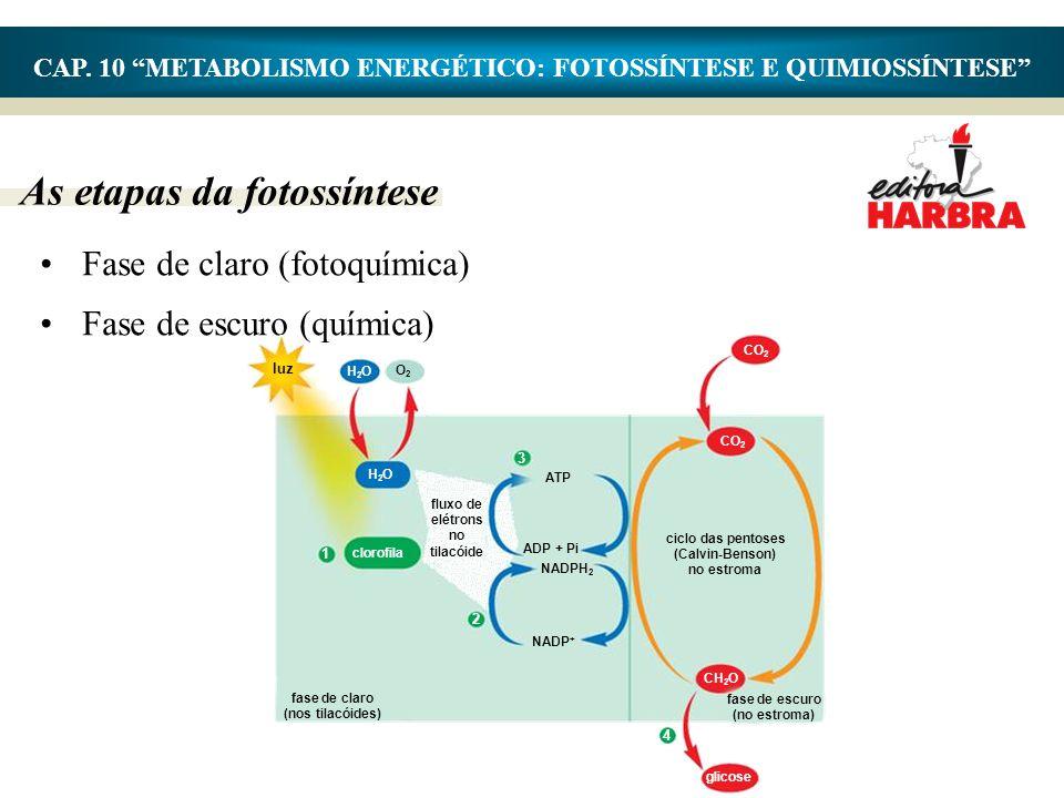 """As etapas da fotossíntese CAP. 10 """"METABOLISMO ENERGÉTICO: FOTOSSÍNTESE E QUIMIOSSÍNTESE"""" •Fase de claro (fotoquímica) •Fase de escuro (química) H2OH2"""