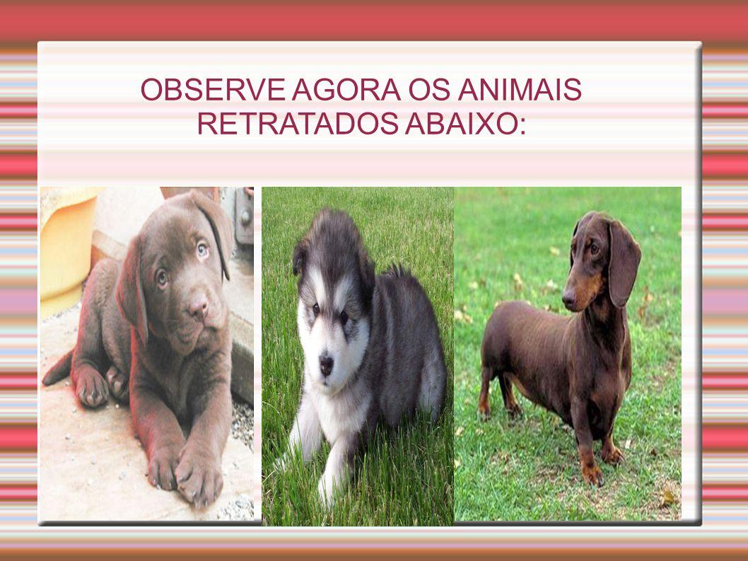 O OBSERVE AGORA OS ANIMAIS RETRATADOS ABAIXO: