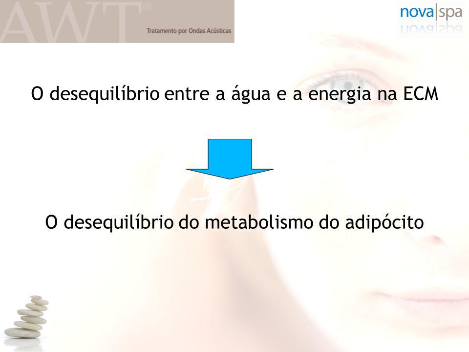 O desequilíbrio entre a água e a energia na ECM O desequilíbrio do metabolismo do adipócito