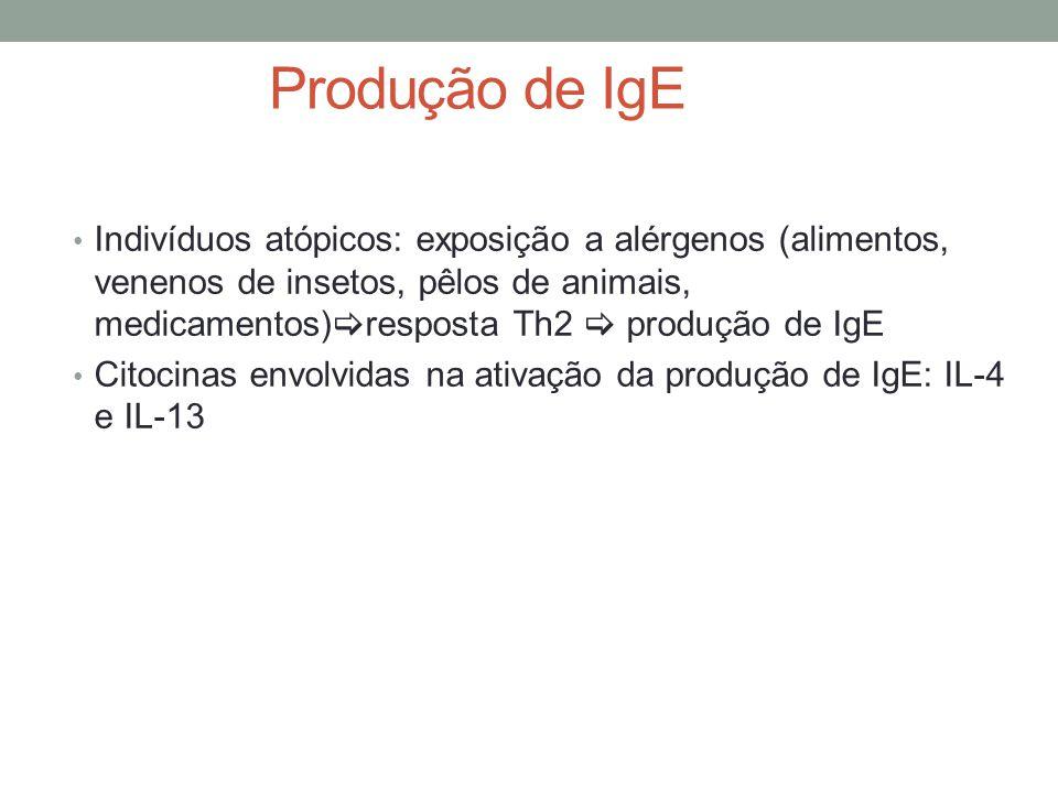 Produção de IgE • Indivíduos atópicos: exposição a alérgenos (alimentos, venenos de insetos, pêlos de animais, medicamentos)  resposta Th2  produção