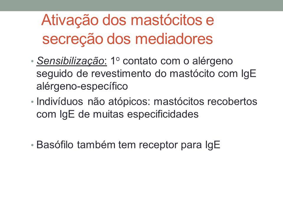 Ativação dos mastócitos e secreção dos mediadores • Sensibilização: 1 o contato com o alérgeno seguido de revestimento do mastócito com IgE alérgeno-e