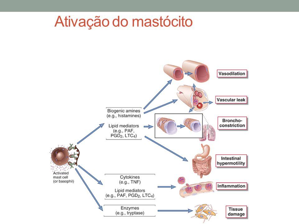 Ativação do mastócito