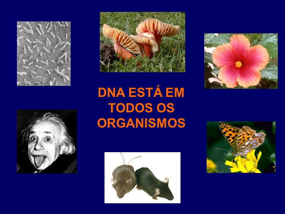 DNA ESTÁ EM TODOS OS ORGANISMOS