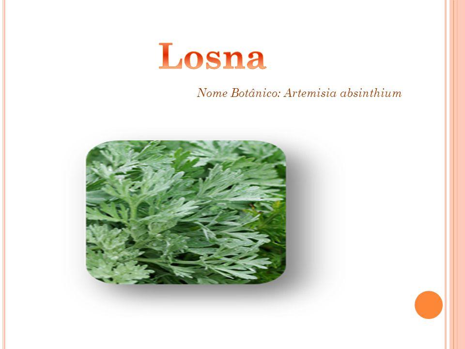 Nome Botânico: Artemisia absinthium