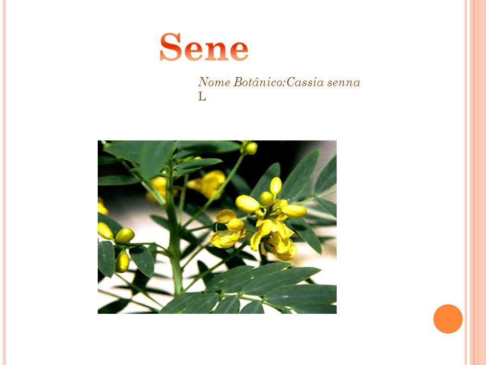 Nome Botânico:Cassia senna L