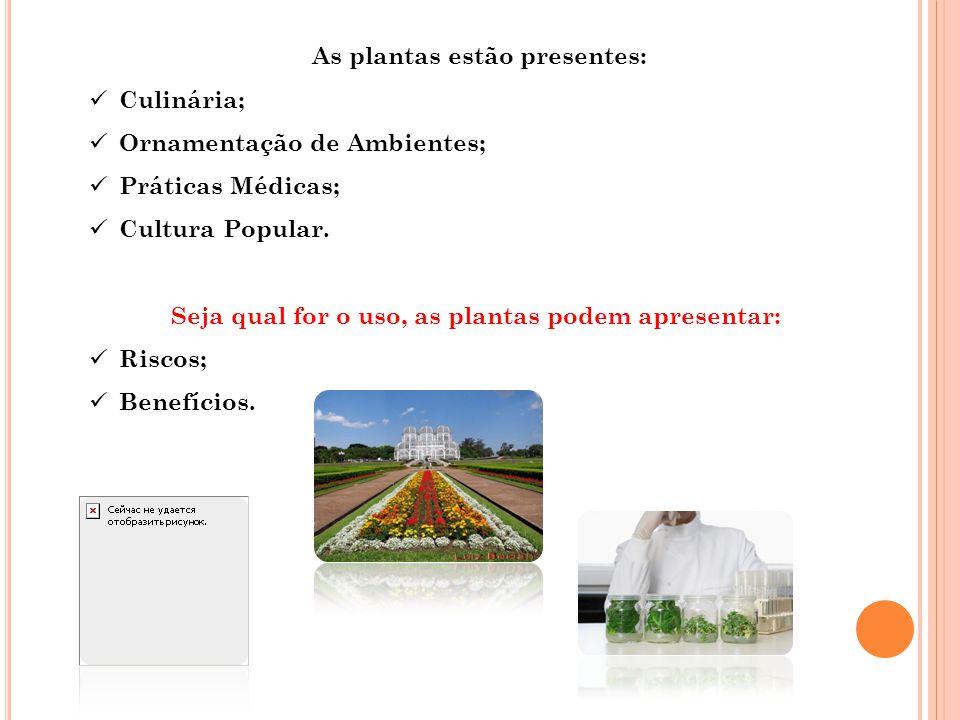 As plantas estão presentes:  Culinária;  Ornamentação de Ambientes;  Práticas Médicas;  Cultura Popular. Seja qual for o uso, as plantas podem apr