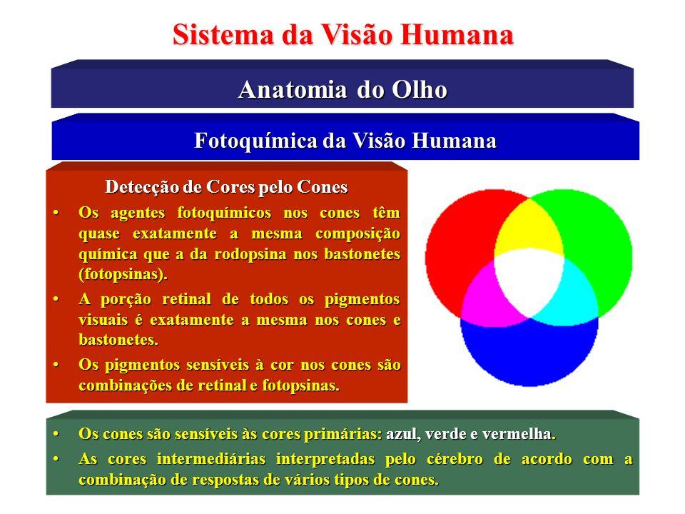 Sistema da Visão Humana Características do Humor Aquoso Características Físico-Químicas •Quantidade : 0,15 – 0,35 ml •Densidade : 1,002 – 1,009 g/cm 3