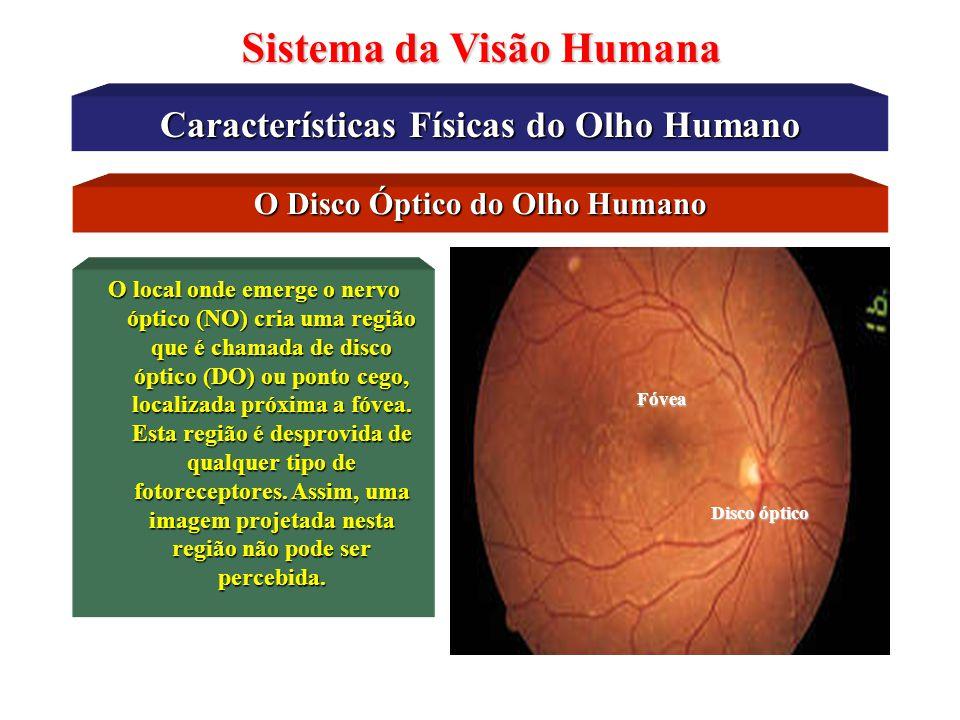 Características Físicas do Olho Humano Sistema da Visão Humana A Óptica do Olho Humano Objeto Imagem Refração Lentes Luz ReflexãoPolarização Difração