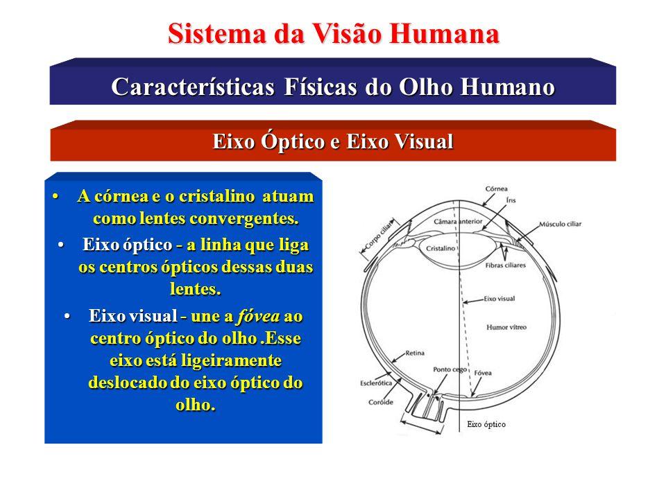 Características Físicas do Olho Humano Sistema da Visão Humana O Disco Óptico do Olho Humano O local onde emerge o nervo óptico (NO) cria uma região q