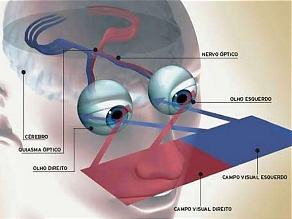 Anatomia do Olho Sistema da Visão Humana Córnea Humor Aquoso Pupila Iris Músculos ciliares Eclerótica Fovea Retina Humor Vítreo Lente Coróide Corpo Ci