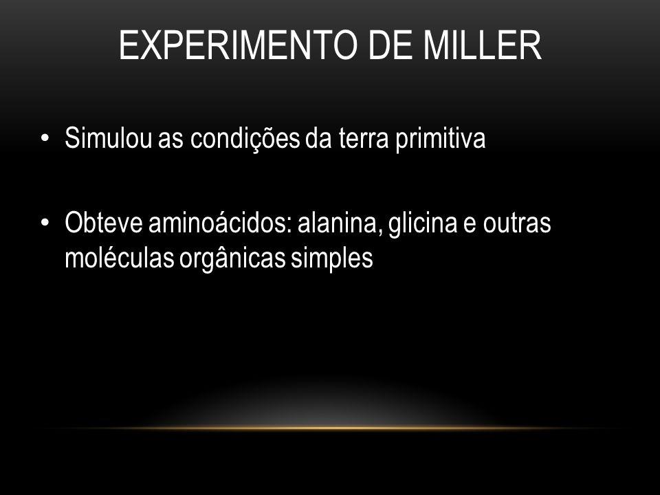 EXPERIMENTO DE MILLER • Simulou as condições da terra primitiva • Obteve aminoácidos: alanina, glicina e outras moléculas orgânicas simples