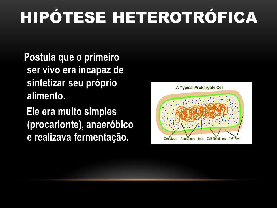 HIPÓTESE HETEROTRÓFICA Postula que o primeiro ser vivo era incapaz de sintetizar seu próprio alimento. Ele era muito simples (procarionte), anaeróbico