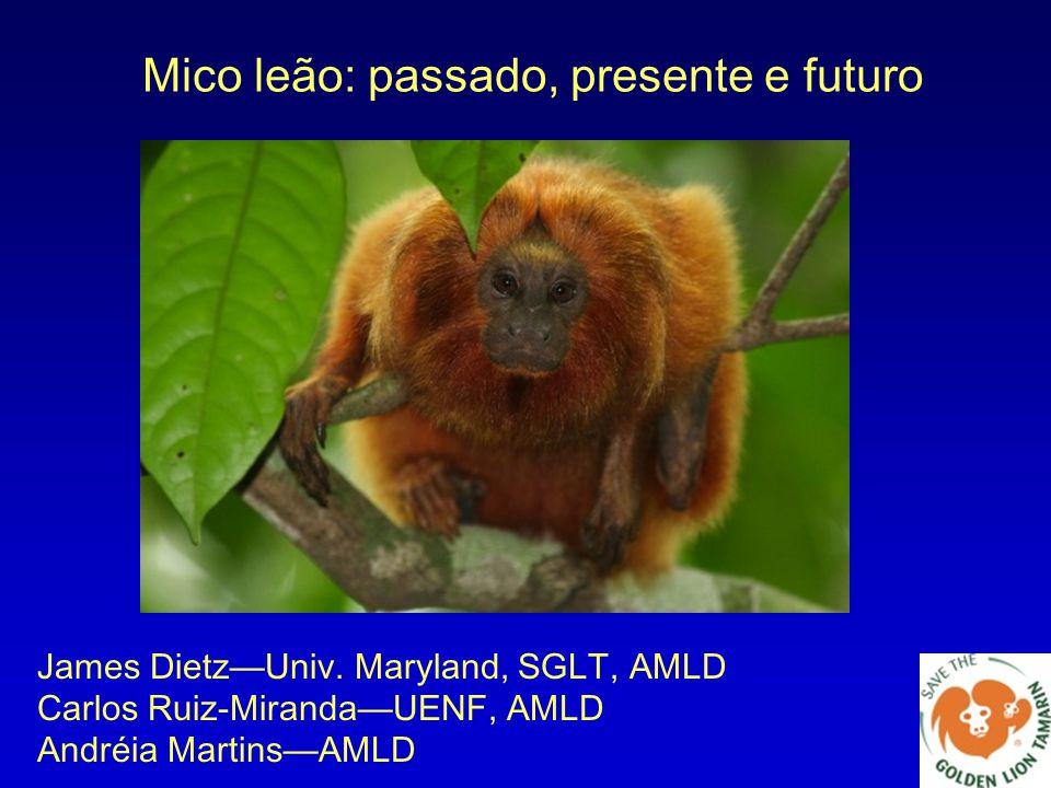 Mico leão: passado, presente e futuro James Dietz—Univ. Maryland, SGLT, AMLD Carlos Ruiz-Miranda—UENF, AMLD Andréia Martins—AMLD