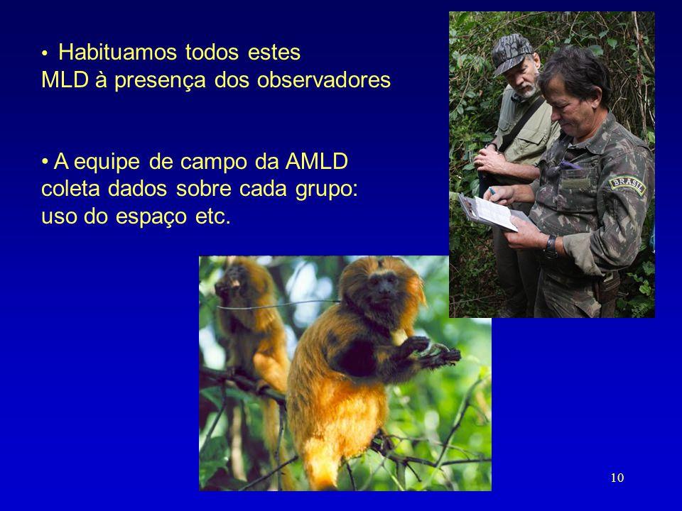 • Habituamos todos estes MLD à presença dos observadores • A equipe de campo da AMLD coleta dados sobre cada grupo: uso do espaço etc. 10