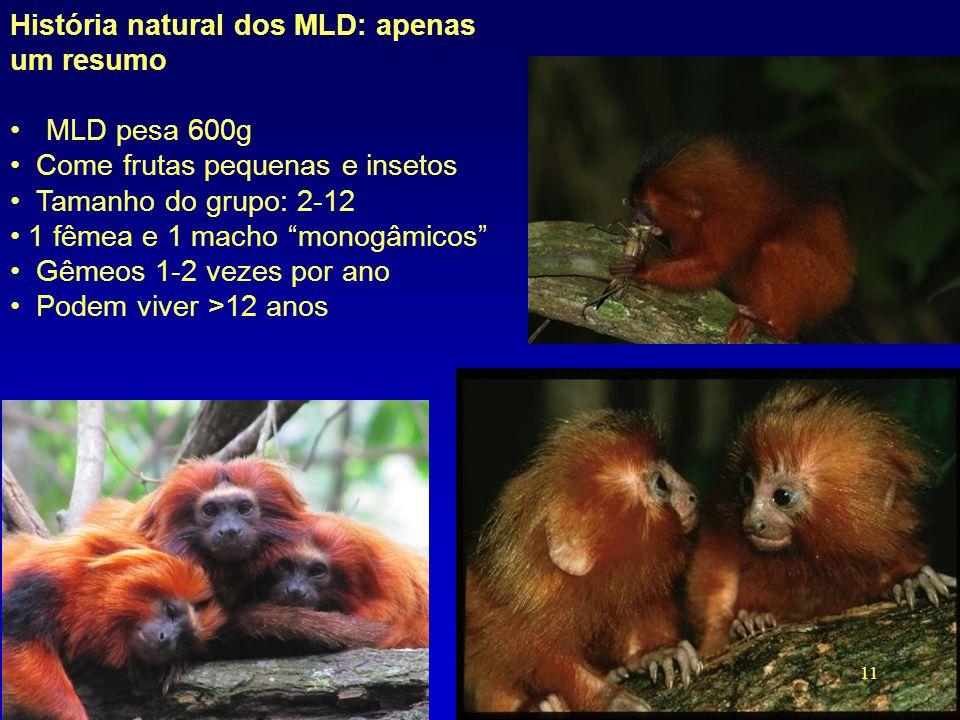"""História natural dos MLD: apenas um resumo •MLD pesa 600g • Come frutas pequenas e insetos • Tamanho do grupo: 2-12 • 1 fêmea e 1 macho """"monogâmicos"""""""