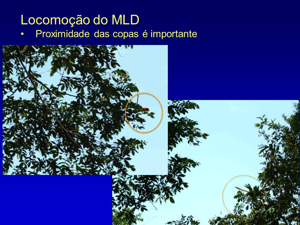 Locomoção do MLD •Proximidade das copas é importante 17