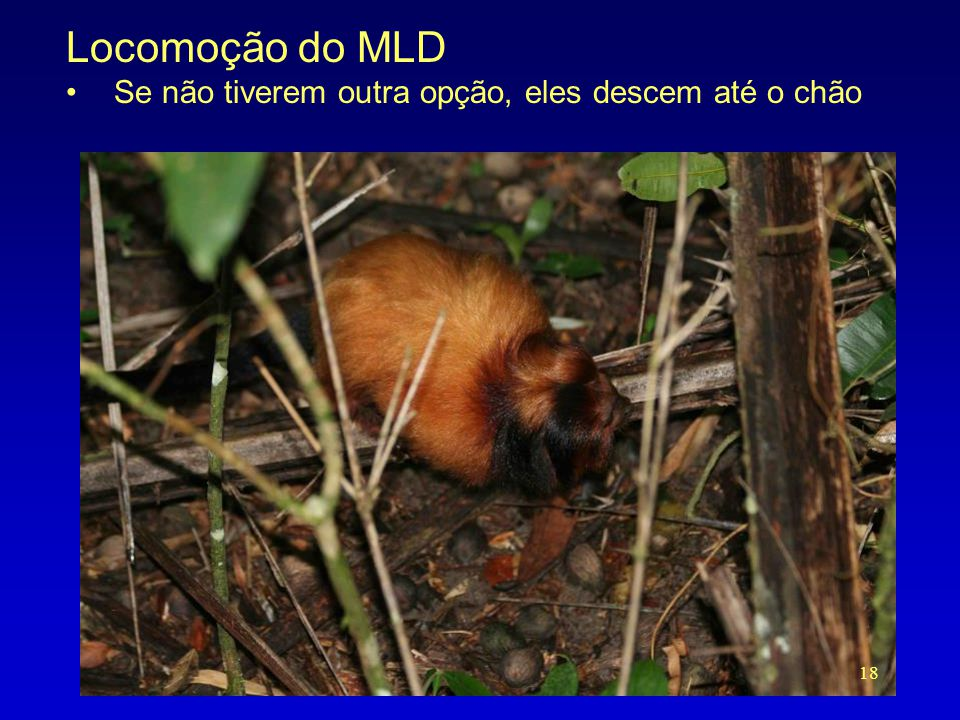 Locomoção do MLD •Se não tiverem outra opção, eles descem até o chão 18