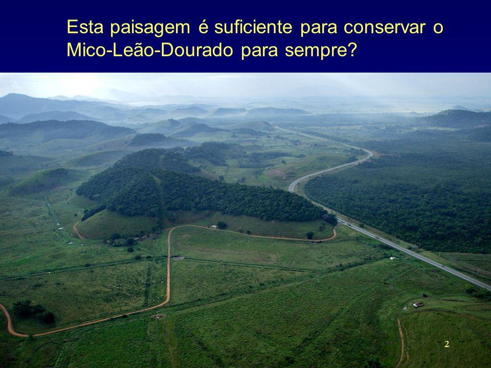 Esta paisagem é suficiente para conservar o Mico-Leão-Dourado para sempre? 2
