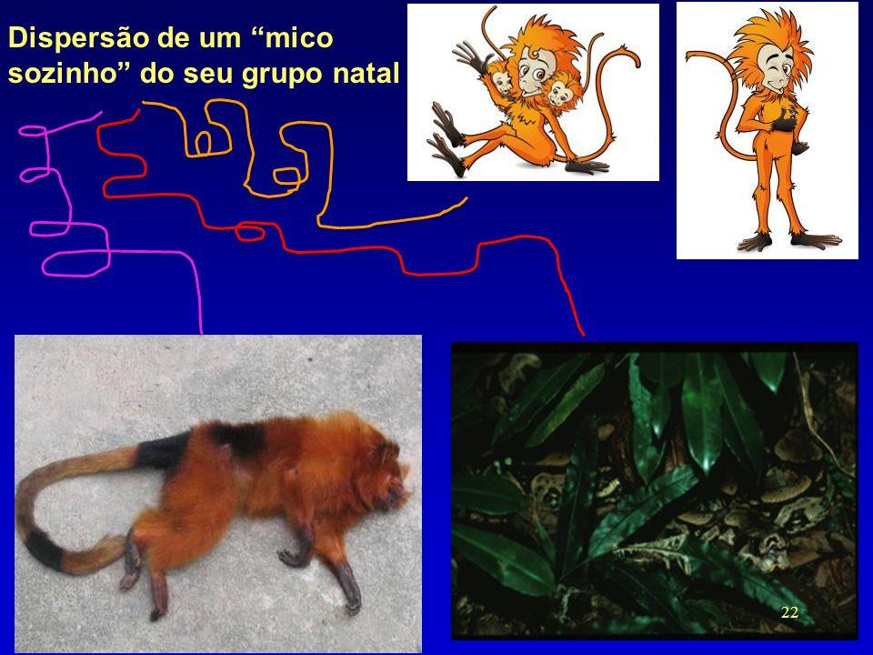 """Dispersão de um """"mico sozinho"""" do seu grupo natal 22"""