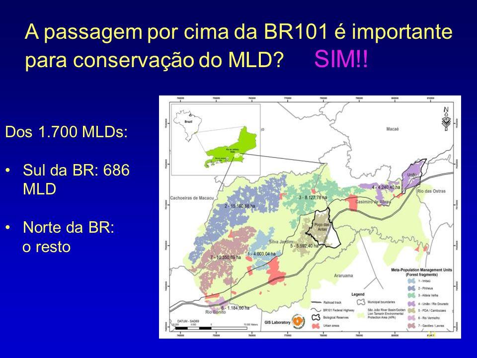 A passagem por cima da BR101 é importante para conservação do MLD? SIM!! Dos 1.700 MLDs: •Sul da BR: 686 MLD •Norte da BR: o resto 24