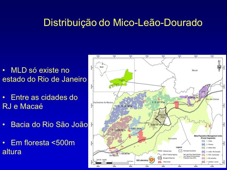 Distribuição do Mico-Leão-Dourado • MLD só existe no estado do Rio de Janeiro • Entre as cidades do RJ e Macaé • Bacia do Rio São João • Em floresta <