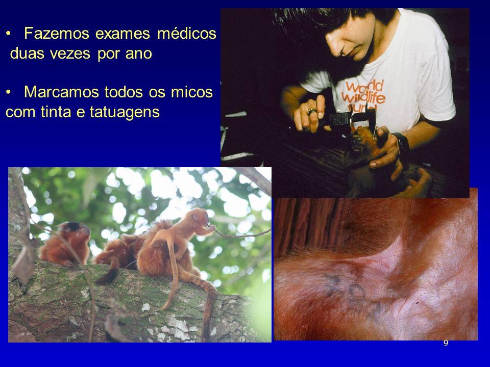 •Fazemos exames médicos duas vezes por ano •Marcamos todos os micos com tinta e tatuagens 9