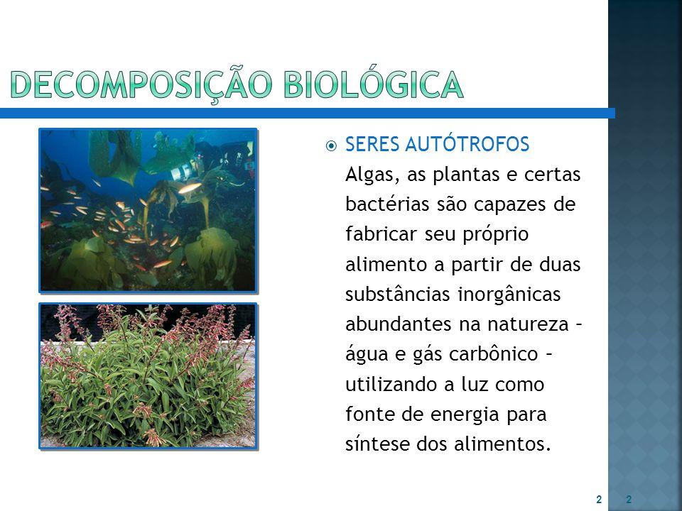  SERES AUTÓTROFOS Algas, as plantas e certas bactérias são capazes de fabricar seu próprio alimento a partir de duas substâncias inorgânicas abundant