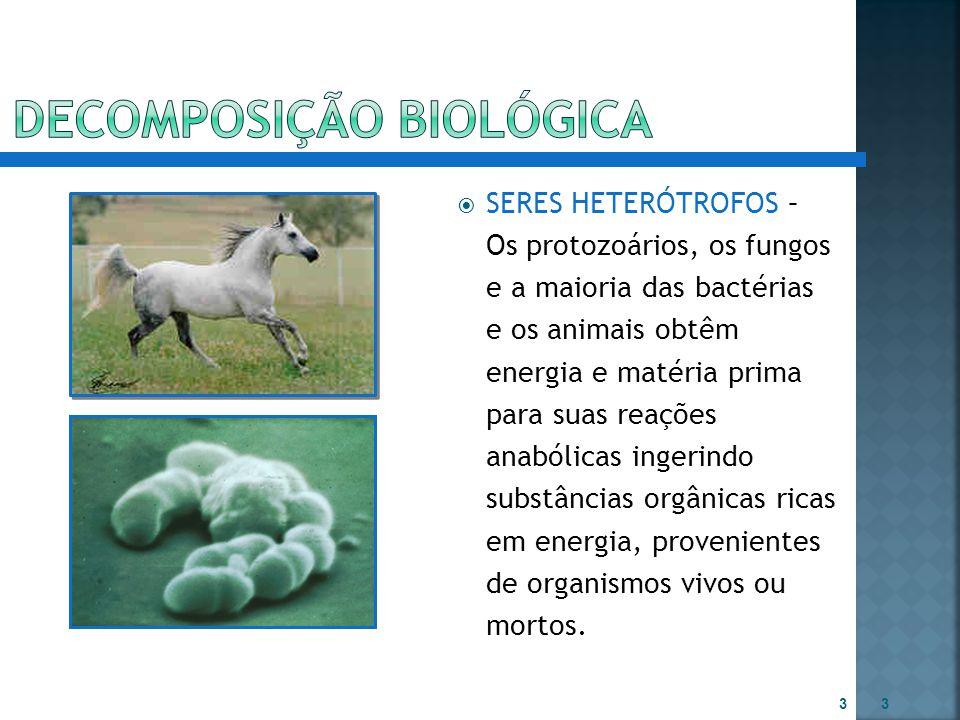  SERES HETERÓTROFOS – Os protozoários, os fungos e a maioria das bactérias e os animais obtêm energia e matéria prima para suas reações anabólicas in