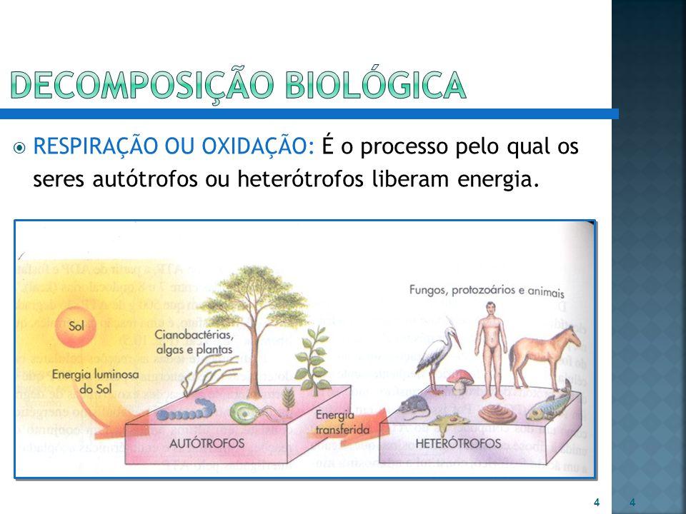 RESPIRAÇÃO OU OXIDAÇÃO: É o processo pelo qual os seres autótrofos ou heterótrofos liberam energia. 4 4