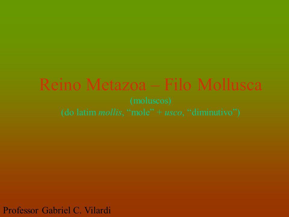 """Reino Metazoa – Filo Mollusca (moluscos) (do latim mollis, """"mole"""" + usco, """"diminutivo"""") Professor Gabriel C. Vilardi"""