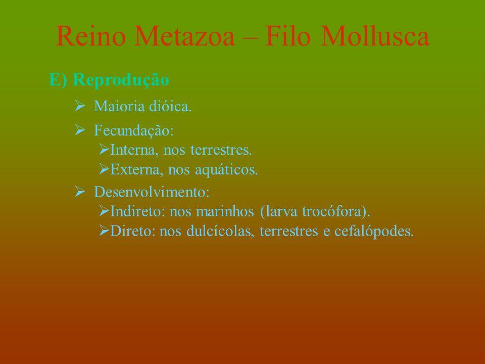 Reino Metazoa – Filo Mollusca E) Reprodução  Maioria dióica.  Fecundação:  Interna, nos terrestres.  Externa, nos aquáticos.  Desenvolvimento: 