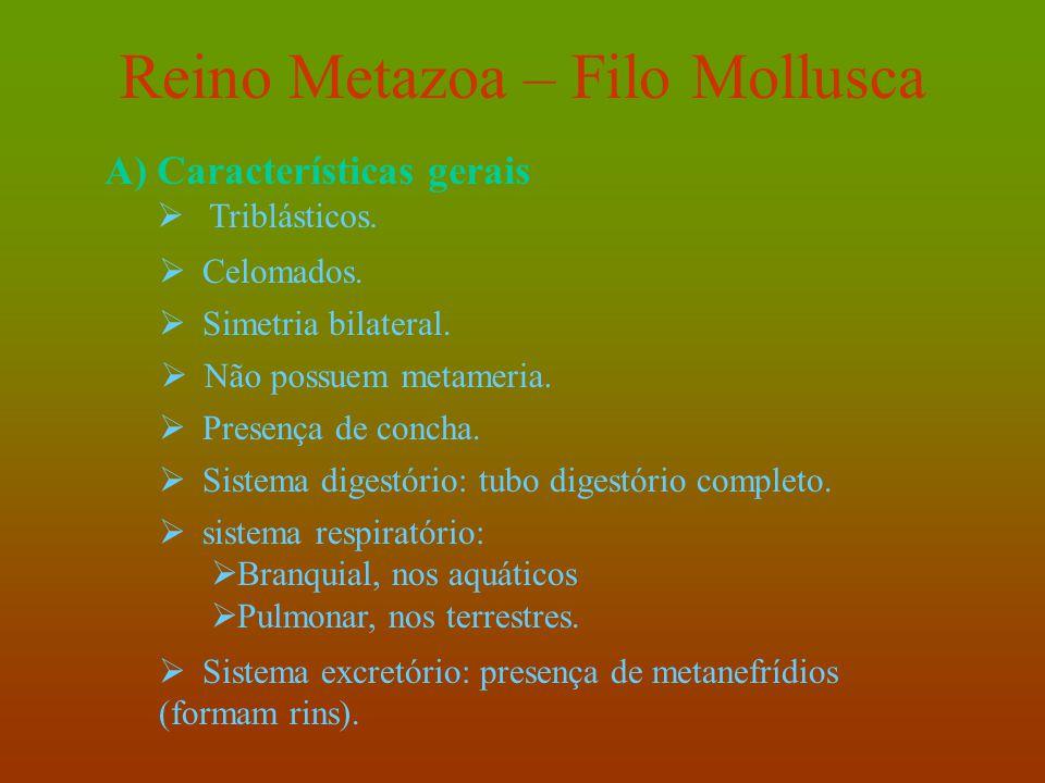 Reino Metazoa – Filo Mollusca A)Características gerais  Triblásticos.  Simetria bilateral.  Não possuem metameria.  Presença de concha.  Celomado