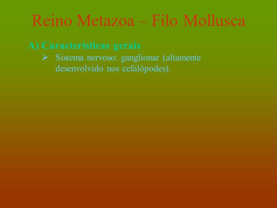 Reino Metazoa – Filo Mollusca A)Características gerais  Sistema nervoso: ganglionar (altamente desenvolvido nos cefalópodes).