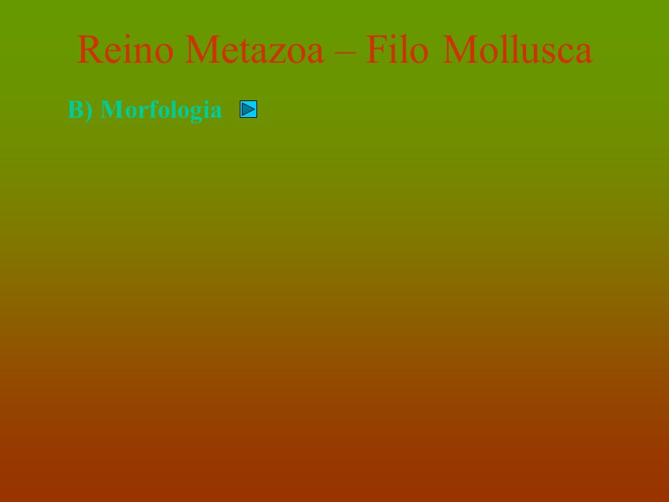 Reino Metazoa – Filo Mollusca C) Classificação Realizada a partir da organização do pé.
