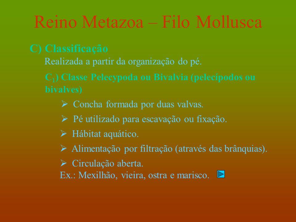 Reino Metazoa – Filo Mollusca C) Classificação Realizada a partir da organização do pé. C 1 ) Classe Pelecypoda ou Bivalvia (pelecípodos ou bivalves)