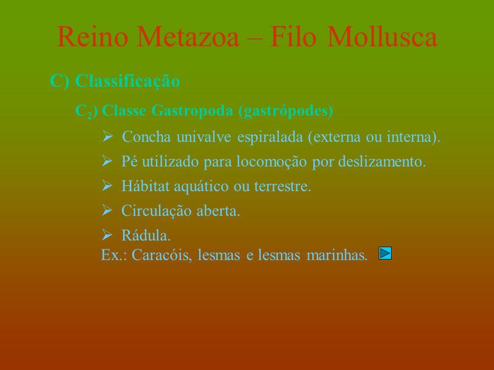 Reino Metazoa – Filo Mollusca C) Classificação C 2 ) Classe Gastropoda (gastrópodes)  Concha univalve espiralada (externa ou interna).  Pé utilizado
