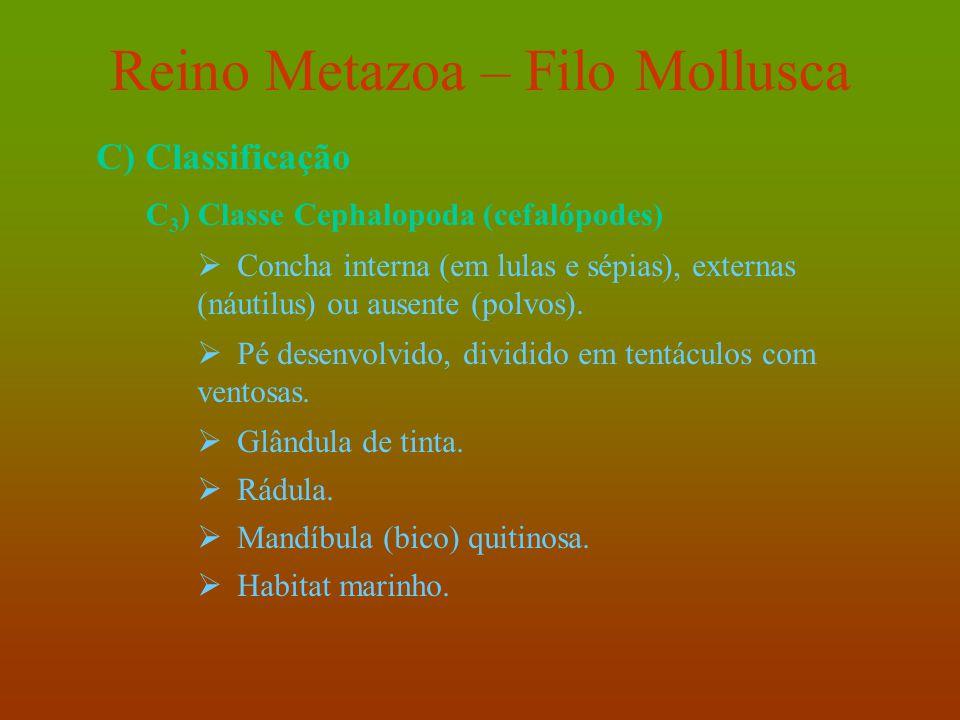 Reino Metazoa – Filo Mollusca C) Classificação C 3 ) Classe Cephalopoda (cefalópodes)  Concha interna (em lulas e sépias), externas (náutilus) ou aus