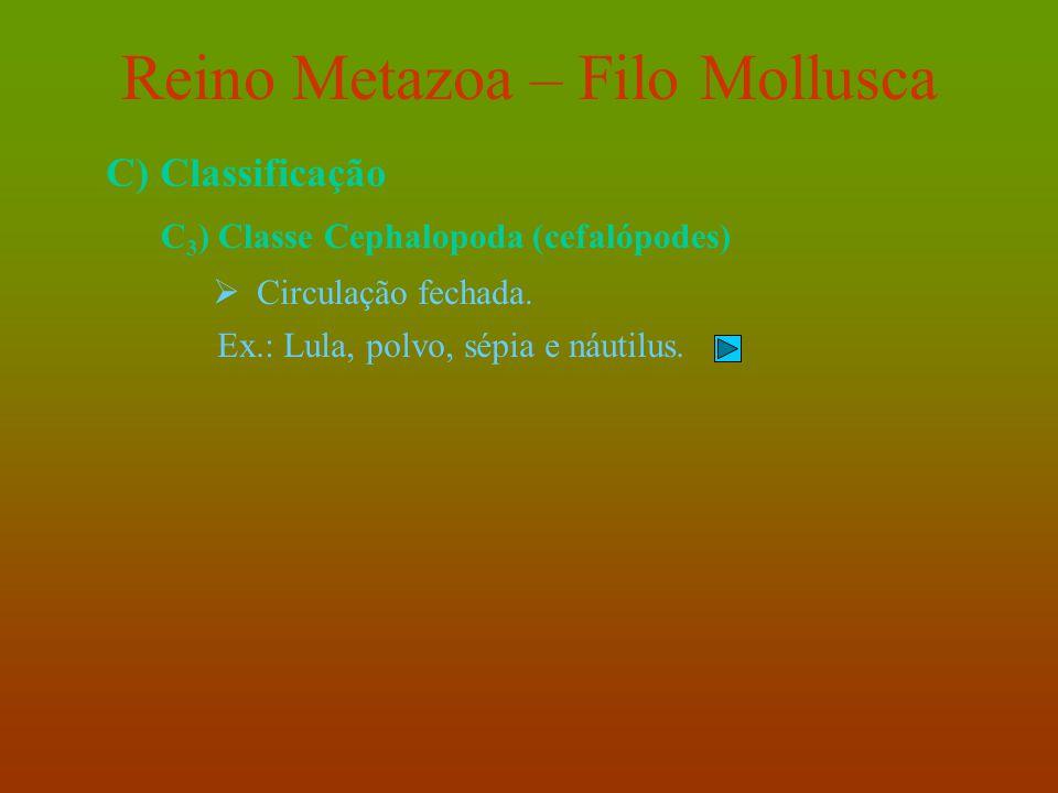 Reino Metazoa – Filo Mollusca C) Classificação C 3 ) Classe Cephalopoda (cefalópodes)  Circulação fechada. Ex.: Lula, polvo, sépia e náutilus.