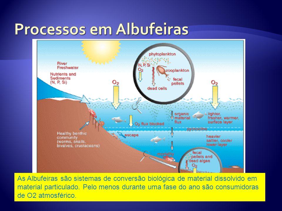 As Albufeiras são sistemas de conversão biológica de material dissolvido em material particulado.