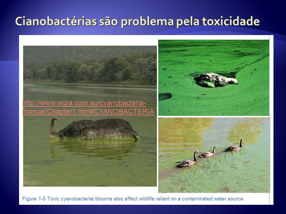 http://www.wqra.com.au/cyanobacteria- manual/Chapter1.htm#CYANOBACTERIA