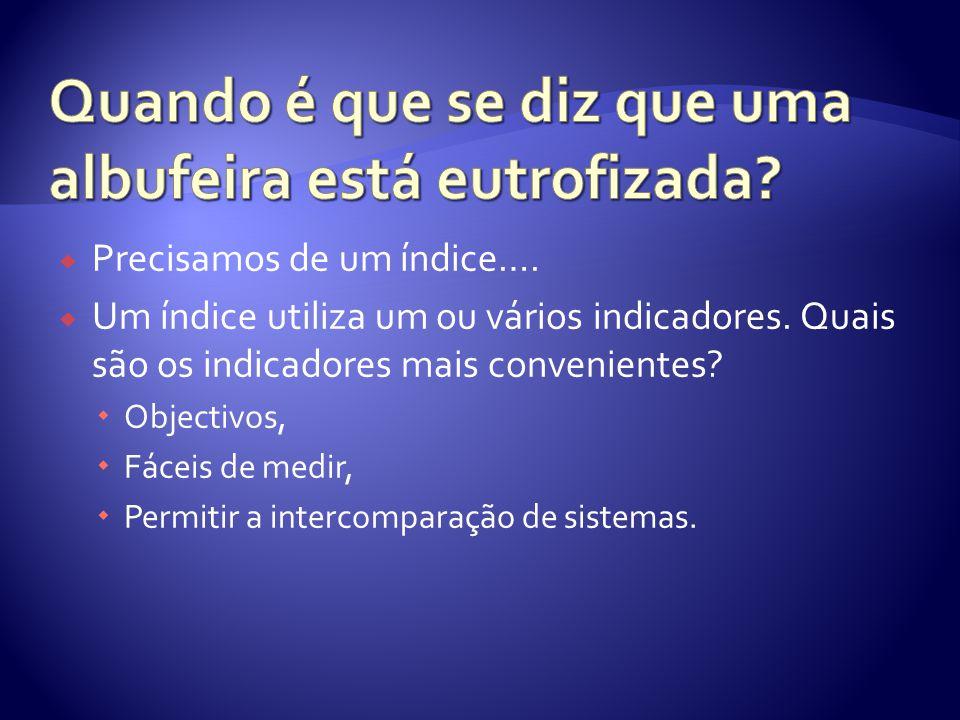  Precisamos de um índice….  Um índice utiliza um ou vários indicadores.