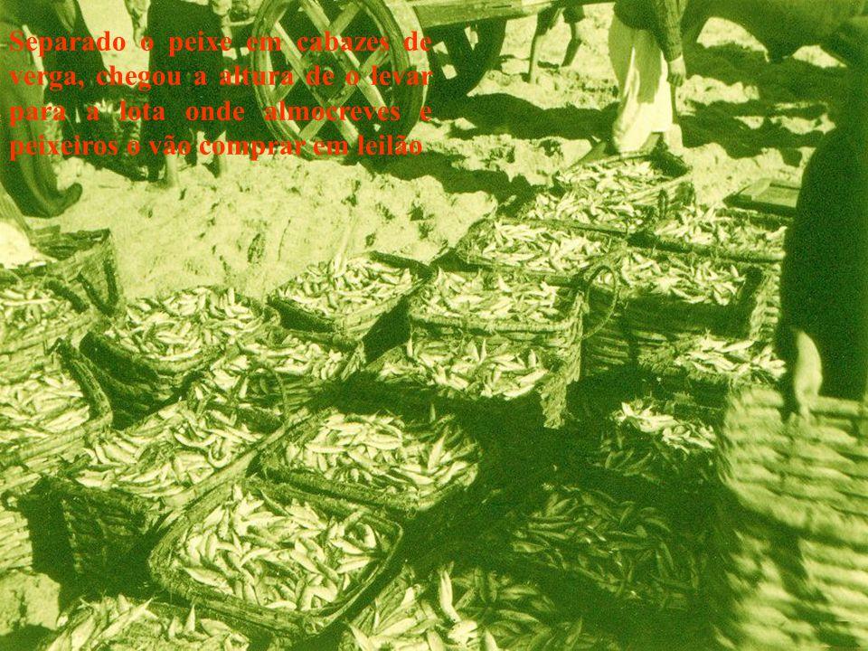 Separado o peixe em cabazes de verga, chegou a altura de o levar para a lota onde almocreves e peixeiros o vão comprar em leilão