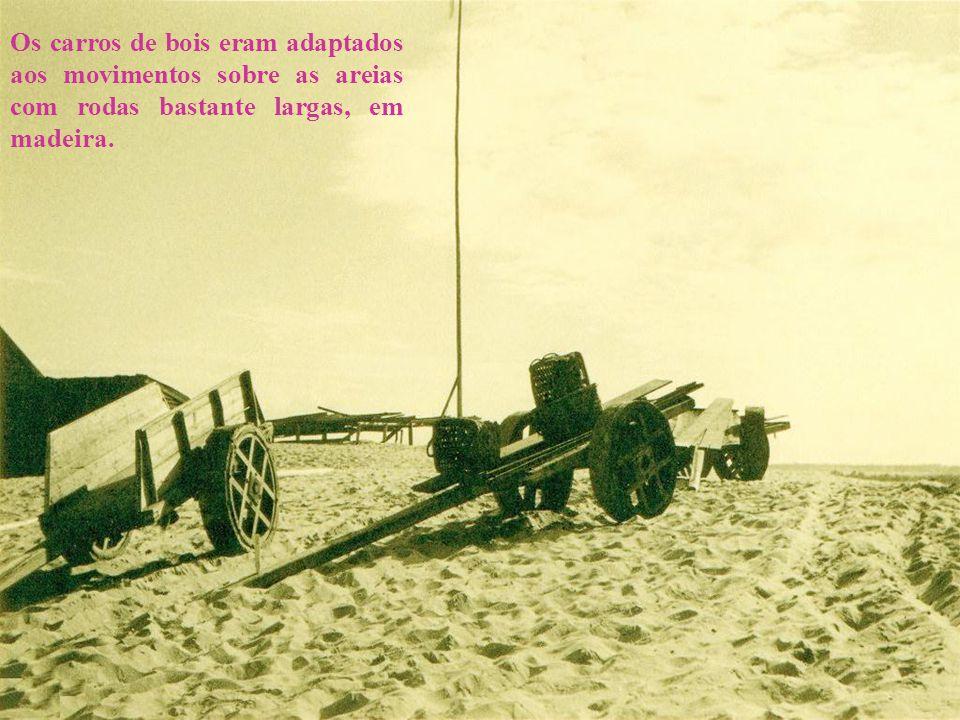 Os carros de bois eram adaptados aos movimentos sobre as areias com rodas bastante largas, em madeira.